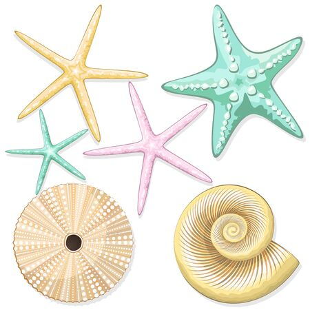 Illustration pour Seashells, starfish, retro urchins sea style vector elements isolated on white - image libre de droit