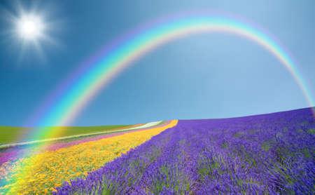 Foto de Flower field and blue sky with clouds. - Imagen libre de derechos