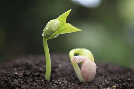 Photo pour Sprout in the forest.  - image libre de droit