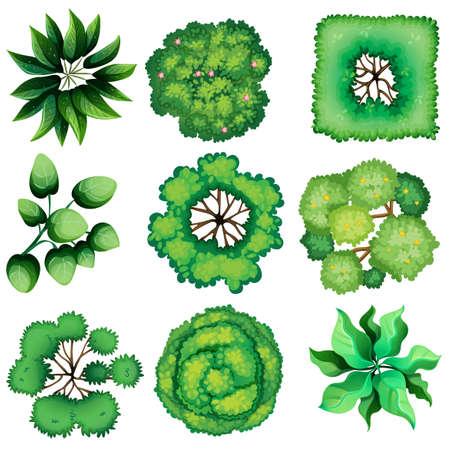Ilustración de Illustration of the topview of leaves on a white background - Imagen libre de derechos