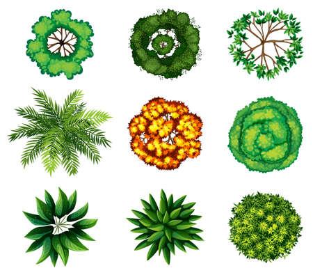 Ilustración de A topview of a group of plants on a white background - Imagen libre de derechos