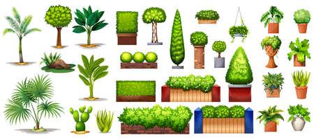 Ilustración de Different species of green plants on a white background - Imagen libre de derechos