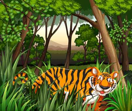 Illustration pour Scenery of a tiger walking in a jungle - image libre de droit