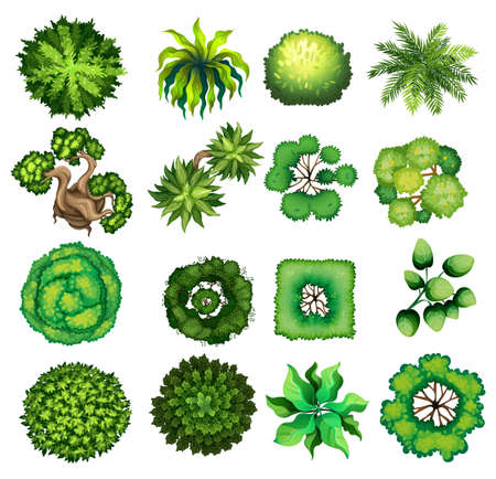Illustration pour Top view of different kind of plants illustration - image libre de droit