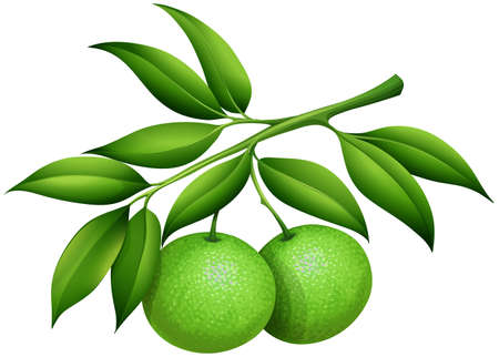 Photo for Fresh limes on the branch illustration - Royalty Free Image