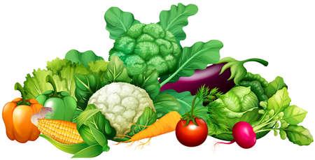 Different kind of vegetables illustration