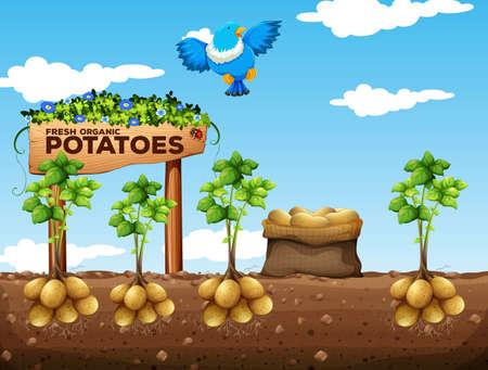 Illustration pour Scene of potatoes farm illustration - image libre de droit