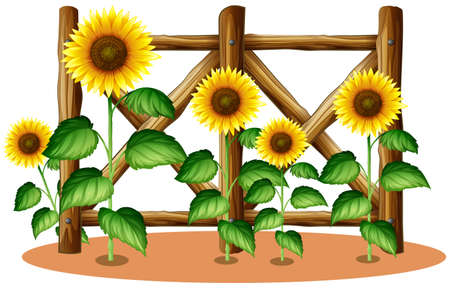 Illustration for Sunflowers and wooden fence illustration - Royalty Free Image
