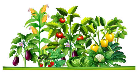 Ilustración de Fresh vegetable plants growing in the garden illustration - Imagen libre de derechos