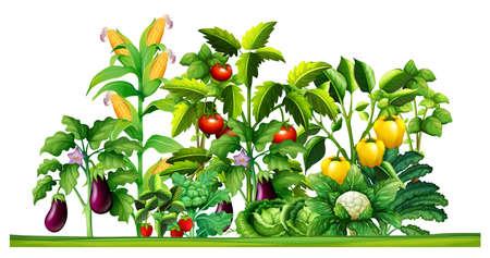 Illustration pour Fresh vegetable plants growing in the garden illustration - image libre de droit