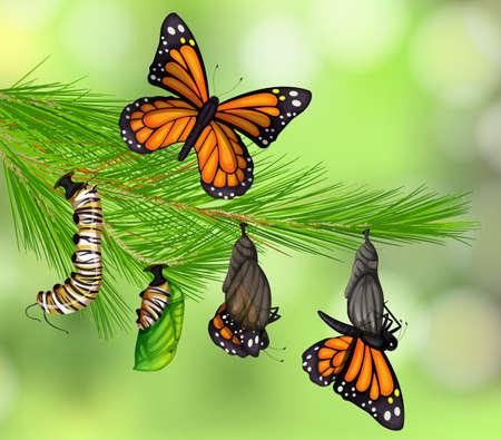 Illustration pour A Set of Butterfly Life Cycle illustration - image libre de droit