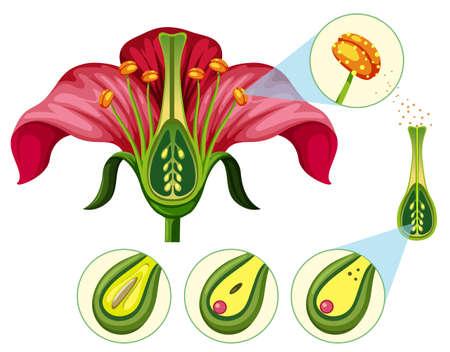 Ilustración de Flower Organs and Reproduction Parts illustration - Imagen libre de derechos