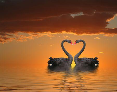Photo pour Two romantic swans at sunset with water reflection - image libre de droit