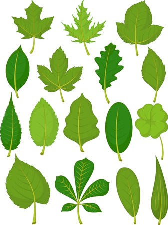 Illustration for Leaves Set - Green Leaves - Royalty Free Image