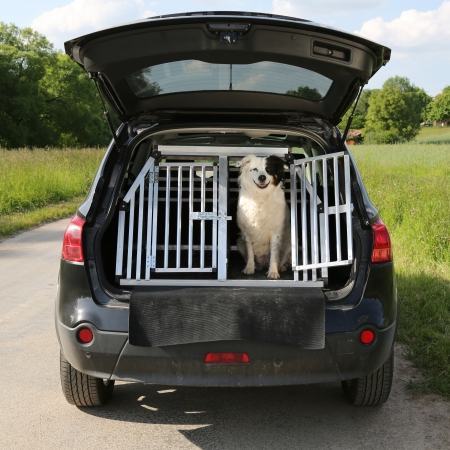 Photo pour Dog pet sitting in a car trunk and wants to travel - image libre de droit