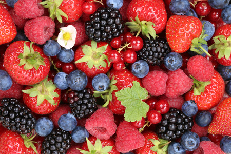 Photo for Berry fruits background with strawberries, blueberries, red currants, raspberries and blackberries - Royalty Free Image