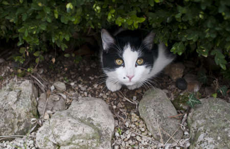 Black and white cat in the bush