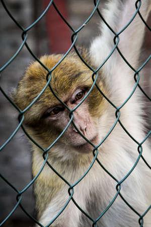 Photo pour portrait of a baby monkey - image libre de droit