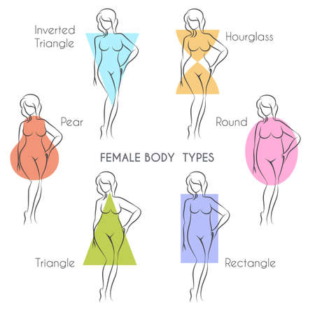 Illustration for Female body types anatomy. Main woman figure shape, free font used. - Royalty Free Image