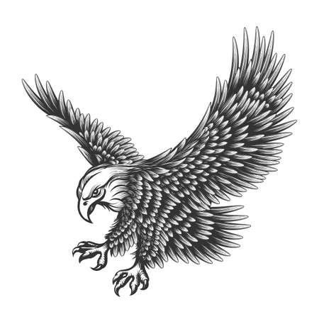 Illustration pour Flying Eagle emblem drawn in engraving style isolated on white. American symbol of freedom. Retro color of falcon. - image libre de droit