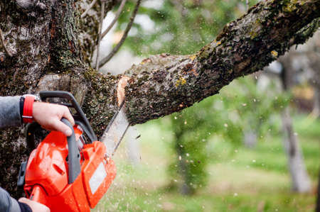 man cutting trees using an electrical chainsaw and professional tools