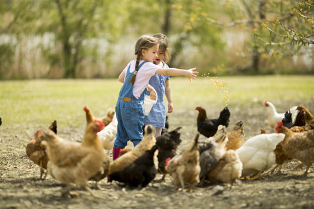 Foto per Two little girl feeding chickens - Immagine Royalty Free