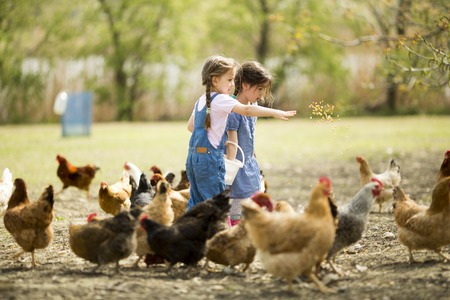 Photo pour Two little girl feeding chickens - image libre de droit
