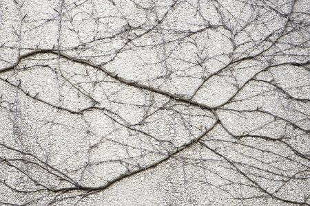 Foto de Closeup of the faded vine plant on a weathered grungy wall - Imagen libre de derechos