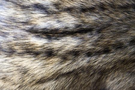 Foto de Closeup detail of the asian palm civet fur - Imagen libre de derechos