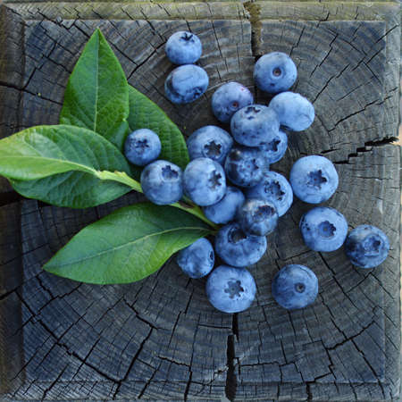 Photo for blueberries - Royalty Free Image