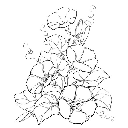 Illustration pour Bouquet with outline Ipomoea or Morning glory flower bell, leaf and bud in black isolated on white background. Perennial climbing plant in contour style for summer design and coloring book. - image libre de droit