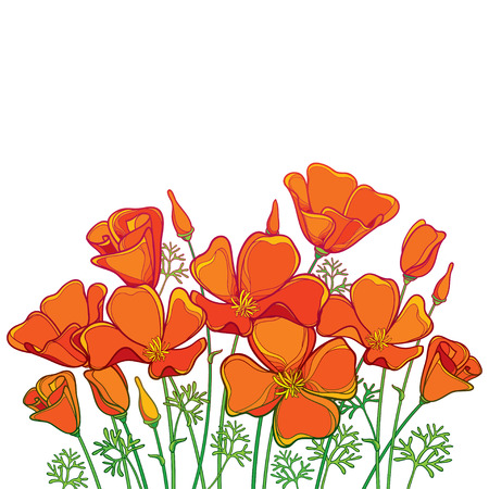 Illustration for Bouquet of outline orange California poppy flower or California sunlight or Eschscholzia, green leaf and bud isolated on white background. Contour poppy for summer design. - Royalty Free Image