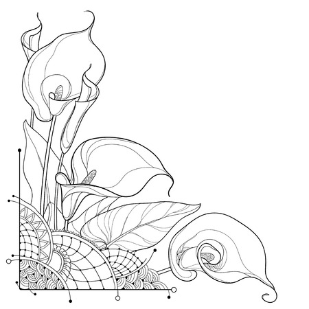Illustration for Corner bouquet of outline Calla lily flower or Zantedeschia, bud and ornate leaf in black isolated on white background. Contour tropical calla flower bunch for summer design or coloring book. - Royalty Free Image