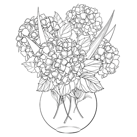Illustration for Bouquet of flowers on a white background. Hydrangea for your design and coloring book. - Royalty Free Image