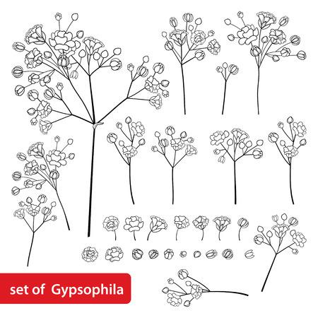 Foto für Set of Gypsophila or Baby's breath flower in black isolated on white. - Lizenzfreies Bild