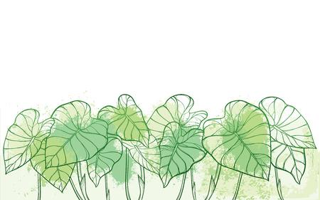 Illustration pour Tropical Colocasia or Taro leaf in pastel green. - image libre de droit