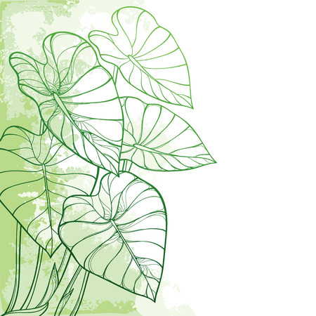 Illustration for Corner tropical leaf Colocasia or Taro plant. - Royalty Free Image