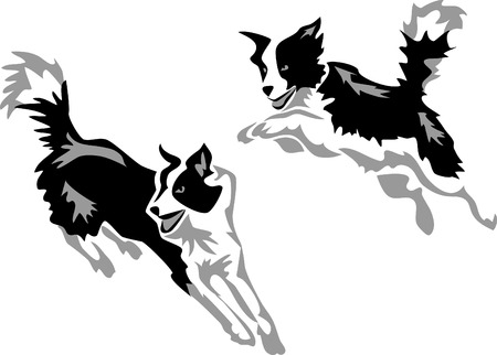 Illustration for stylized jumping border collie - Royalty Free Image