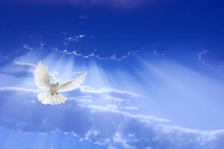 Photo for White dove with outstretched wings flying over dramatic sky  - Royalty Free Image