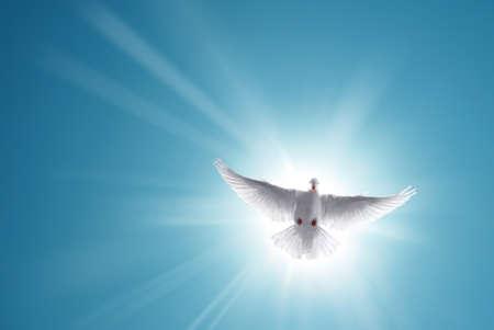 Photo pour White dove in a blue sky, symbol of faith - image libre de droit