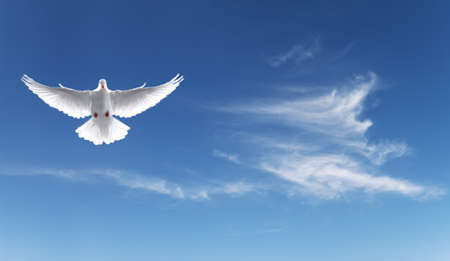 Photo for White Holy Dove flying in the sky panoramic view - Royalty Free Image