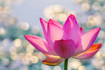 Photo for Water lily over bright colorful background - Royalty Free Image