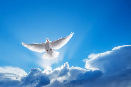 Photo for White Dove in the air symbol of faith over shiny background - Royalty Free Image