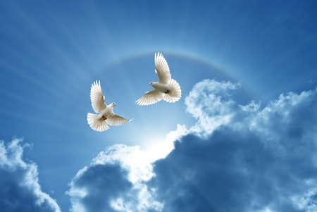 Foto de White Doves in the air over cloudy sky concept of religion and peace - Imagen libre de derechos