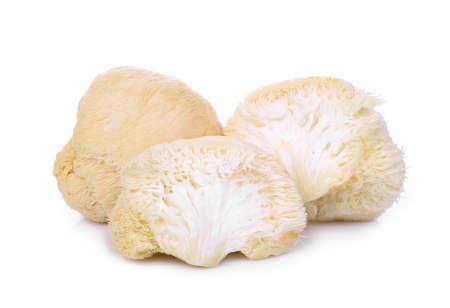 Photo for mokey head mushroom , lion mane or yamabushitake isolated on white background - Royalty Free Image