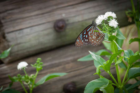 A butterfly set on the flower in front of fence