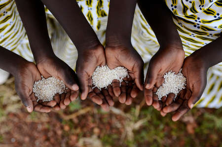 Photo pour Group of African Black Children Holding Rice Malnutrition Starvation Hunger. Starving Hunger Symbol. Black African girls holding rice as a malnutrition symbol. - image libre de droit