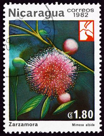Foto de NICARAGUA - CIRCA 1982: a stamp printed in Nicaragua shows mimosa albida, flowering plant, circa 1982 - Imagen libre de derechos
