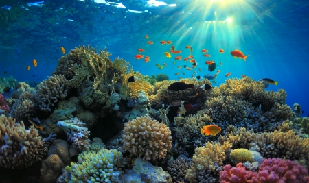Photo for beautiful view of sea life  - Royalty Free Image