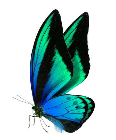 Photo for beautiful butterfly isolated on a white background - Royalty Free Image